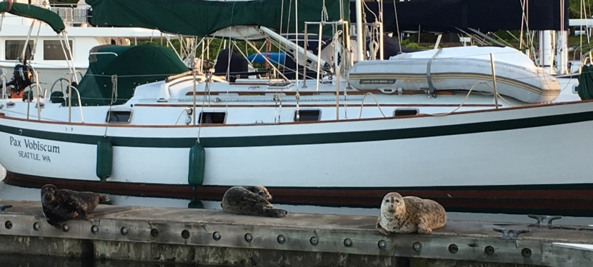 Puget Sound's awesome marinemammals